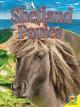 Go to record Shetland ponies